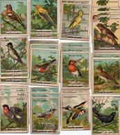 """¤ 12 Chromos (plus 21 Doubles) """" Cafés Gilbert """" Série Les Oiseaux (dim. 4x5,5cm) - Tee & Kaffee"""