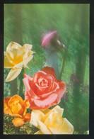Ed. C. Y Z. Nº 6049-A. Nueva. - Flores