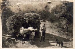 D64  ST JEAN DE LUZ  Attelage Basque  .........  (Ref FB476 ) - Saint Jean De Luz