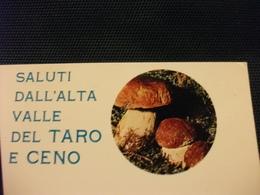 FUNGHI MUSHROOMS CHAMPIGNONS SETAS FUNGO PORCINO SALUTI DALL'ALTA VALLE DEL TARO E CENO - Funghi