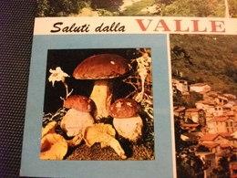 FUNGHI MUSHROOMS CHAMPIGNONS SETAS FUNGO PORCINO SALUTI DALLA VALLE ARGENTINA MOLINI DI TRIORA IMPERIA - Funghi