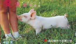Télécarte Japon *  YEAR Of The PIG (己亥) ZODIAC  (590) COCHON * PHONECARD JAPAN * TK * SCHWEIN * PORCO * VARKEN - Zodiaque