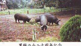 Télécarte Japon *  YEAR Of The PIG (己亥) ZODIAC  (591) COCHON * PHONECARD JAPAN * TK * SCHWEIN * PORCO * VARKEN - Zodiac
