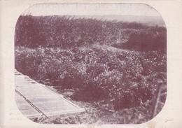 FIESTA NACIONAL DEL ARBOL. HOMENAJE CENTENARIO BRASIL 1922. ARGENTINA. ENVIRONMENT & PROTECTION  - BLEUP - Bloemen, Planten & Bomen