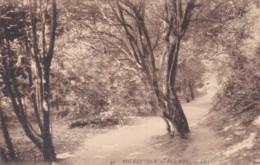 FOLKESTONE -PINE WALK   LL 49 - Folkestone