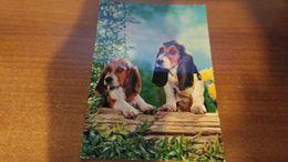 Cartolina: Cagnolini Viaggiata (a32) - Cartoline