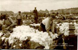 N°68520 -cpa Le Havre -l'échantillonnage Du Coton- - Le Havre