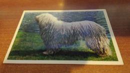 Cartolina:cane Pastore Viaggiata (a32) - Cartoline