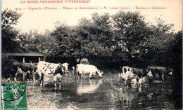 50 - DIGOSVILLE --  Manoir De St Gabriel à M. LEPONT - Bestiaux à L'abreuvoir - Frankreich