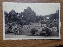 Antwerpen, Dierentuin - Zoo / Zicht Op Het Groot Park Der Herkauwers --> Beschreven 1937 - Antwerpen