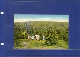 ##(ROYBOX1)-Postcards- Brazil - Santos - Cultura De Cafè Numa Fazenda - Used 1925 To Italy - Brésil