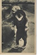 CPA Parc Zoologique Du Bois De Vincennes - Paris - UN OURS DES COCOTIERS - Orsi
