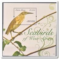Sierra Leone 2011, Postfris MNH, Birds - Sierra Leone (1961-...)