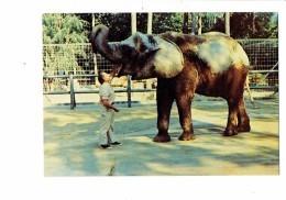 72 - LA FLECHE - PARC ZOOLOGIQUE ZOO - Jacques Bouillault Naturaliste - éléphante Africaine - éléphant - - Animaux & Faune