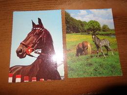 10 Kaarten Met PAARDEN - HORSES (zie Foto's) --> 8 Onbeschreven + 2 Beschreven (1) - Horses