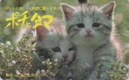Télécarte Japon / 110-011 - ANIMAL - CHAT Chats - CAT Japan Phonecard - KATZE - GATO - GATTO -  4879 - Gatos