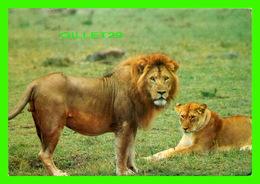 LIONS - UN COUPLE DE LIONS - TRAVEL IN 1992 FROM KENYA - - Lions