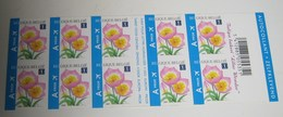 Boekje / Carnet 99 Tulipa Bakeri Lilac Wonder - Tulp Baken Voor Europese Zendingen 3872** MNH - Booklets 1953-....