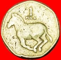 # HEPTAGON: BOTSWANA ★ 1 PULA 1991! LOW START ★ NO RESERVE! - Botswana