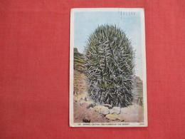 Barrel Cactus     Ref 3112 - Cactus