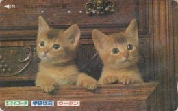 Télécarte Japon / 110-011 - Animal - CHAT Chats - CAT Japan Phonecard - KATZE - GATTO -  4904 - Gatos