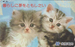 Télécarte Japon / 110-015 - Animal - CHAT Chats - CAT Japan Phonecard - KATZE - GATTO - GATO - 4914 - Katten