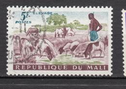 Mali, Berger, Shepherd, Mouton, Lamb, Sheep, Taureau, Taurus - Ferme