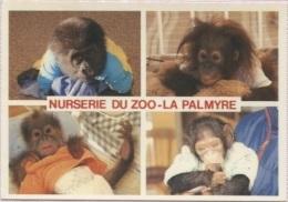 CPM - ZOO DE LA PALMYRE - NURSERIE - Edition M.Marcou - Animaux & Faune