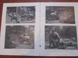 1907 Exposition Coloniale Vincennes  LE DERACINEMENT  D UN ARBRE   PAR UN ELEPHANT  Domestiqué - Vieux Papiers