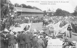 CP MORTAGNE CONCOURS HIPPIQUE JUIN 1908 PRESENTATION DES JUMENTS - Mortagne Au Perche