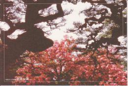 AKJP Japan: Takamatsu - Ritsurin Garden - Spring - Japan