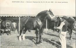 CP MORTAGNE CONCOURS HIPPIQUE JUIN 1908 UN CHEVAL PERCHERON - Mortagne Au Perche