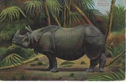 CPA ANIMAUX Et FAUNE - The Rhinoceros Nashorn Rhinocéros Theocrom Series 866 - Rhinocéros