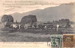 Chili - Oblitérations / 27 - En El Campo De Limache - Chili