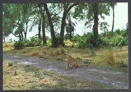 CP N°21 -Gorongosa,Moçambique- Lion - Lions
