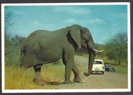 CP N° 423- Animaux & Faune-Where Mass Meets Motor.. South Africa -Eléphant - Éléphants