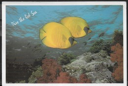 MAR ROSSO - MASKED BUTTERFLY FISH ( CHAETODON SAMILARVATUS) - VIAGGIATA 2002 FRANCOBOLLO ASPORTATO - Pesci E Crostacei