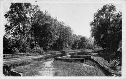 11 VILLEFRANCHE DE LAURAGAIS Canal Du Midi Le Bosquet CPSM PF Ed. Combier /cim - Altri Comuni