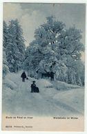 Suisse // Schweiz // Switzerland //  Non Classés  // Etude De Forêt En Hiver, Waldstudie Im Winter - Suisse