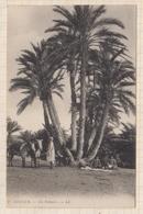 8AK4214 TOZEUR UN PALMIER 2 SCANS - Tunisia