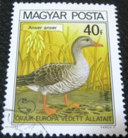 Hungary 1980 Birds European Nature Conservation Anser Anser 40f - Used - Hungary