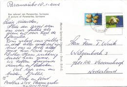 Suriname 2002 Paramaribo Baby Banaan Noni Fruit Morinda Citrifolia Viewcard - Suriname