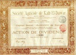 Société Agricole De KAFR-EL-DAWAR - Afrique