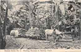 Costa Rica / 06 - Hauling Bananas To Railway Track - Costa Rica