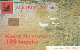 Albania - Ducks - Albanië