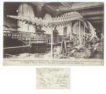 CPA Monaco Musée Océanographique Baleine - Oceanographic Museum