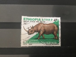 Ethiopië / Ethiopia - Zwarte Neushoorn (45) 2005 - Ethiopië