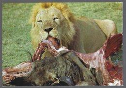 CP N° 43 -Gorongosa,Moçambique- Lion - Lions