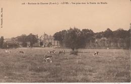 28 - LEVES - Vue Prise Dans La Prairie Du Moulin - Lèves