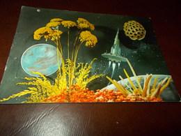B706  Spazio Navicella Spaziale Viaggiata - Astronomia